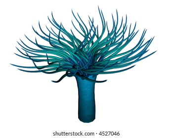 3D illustration of an anemone