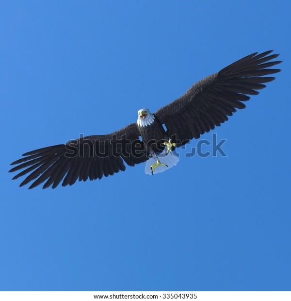 3d Illustration Bald Eagle Sky Stock Illustration 335043935