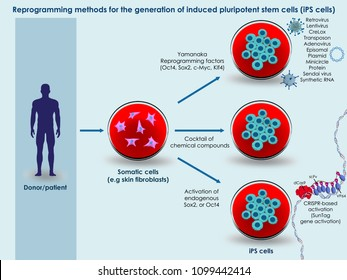 3d illustration of the basic ways to generate induced pluripotent stem cells