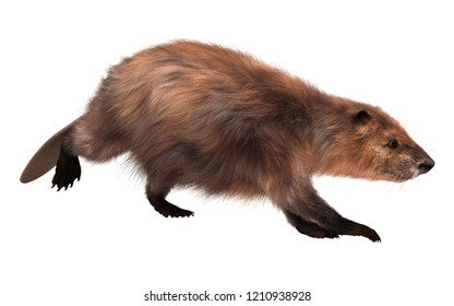 3D illustration beaver isolated on white background