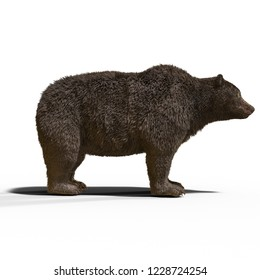 3D illustration of a black bear ursus arctos over white