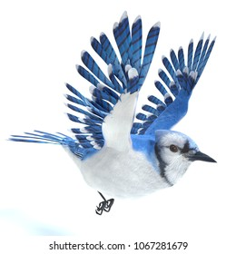 3d illustration of a blue jay