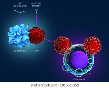 3d illustration of cancer immunotherapy using CpG combined with anti-OX40 antibody
