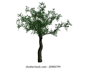 3D Illustration of a cherry tree