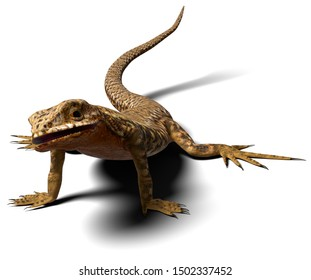 A 3d illustration of a common wall lizard found in Europe and Americas. A male isolated on a white background