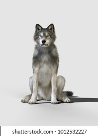 3d Illustration danger wolf animal. Brown and Gray wolf, Canis lupus. Wild dog in the nature.
