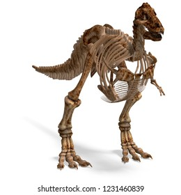 3D illustration of a dinosaur skeleton trex over white