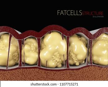 3d Illustration of Fat Cells on black background