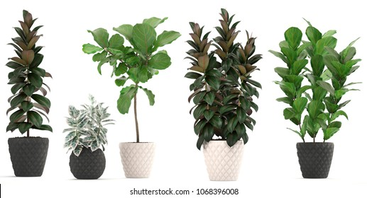 3D illustration Ficus trees set