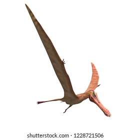 3D illustration of a flying dinosaur pterosaur anhanguera  over white