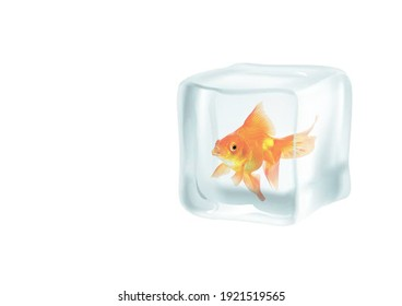 3D illustration of a Frozen Goldfish in an Ice cube Global Warming Extreme Weather, This is not a real fish but a a 3d Rendering and 3D Design to bring awareness to global warming in Texas
