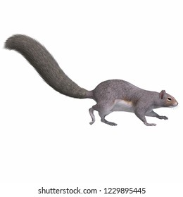 3D illustration of a grey squirrel over white