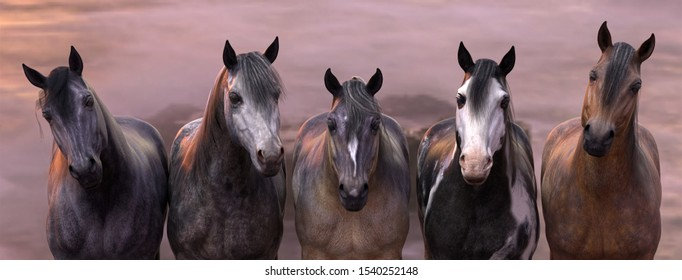 A 3d illustration of a herd of horses against a sunset sky with a web header format