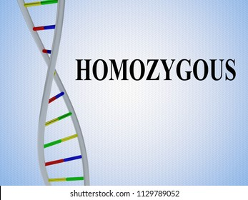 3D illustration of HOMOZYGOUS script with DNA double helix , isolated on pale blue gradient.