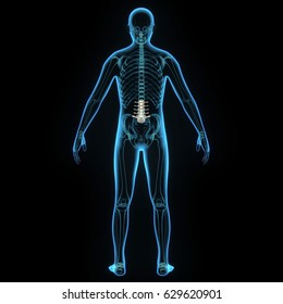 3d illustration human body spinal cord