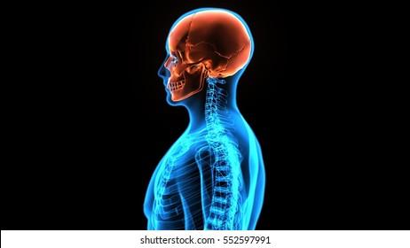 3d illustration human bodyside face skull
