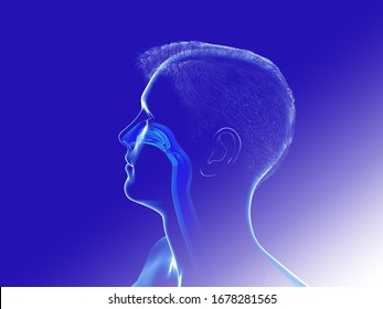 3D illustration of Human Head Anatomy. Of transparent crsital showing the interior of the nose and the nostrils. ENT.
