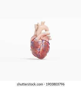 3d illustration human heart with white background