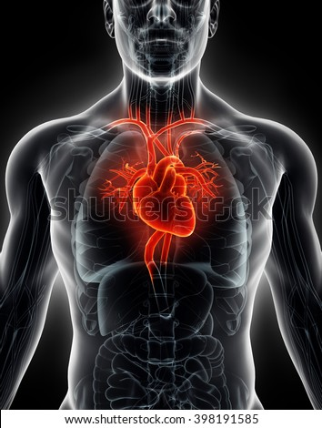 3D illustration Human Internal Organic - Human Heart, medical concept.