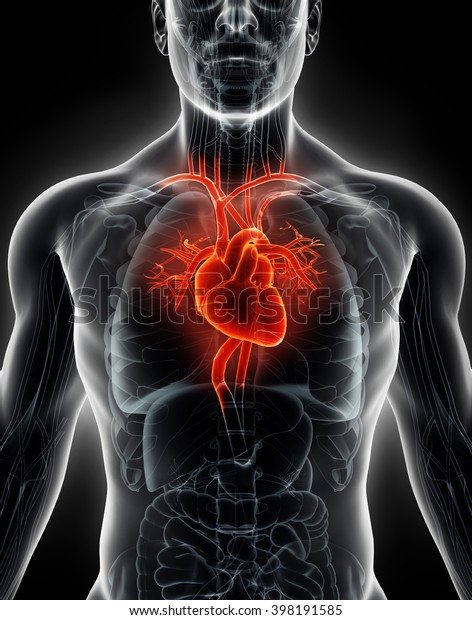 3D illustration Human Internal Organic - Human Heart, medical concept.
