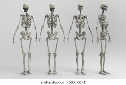 3D Illustration Of A Human Skeleton At Four Different Angles On A Light Transparent Masked Background