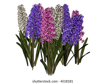 3D illustration of a hyacinth