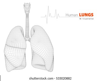3D illustration of Lungs - Part of Human Organic.