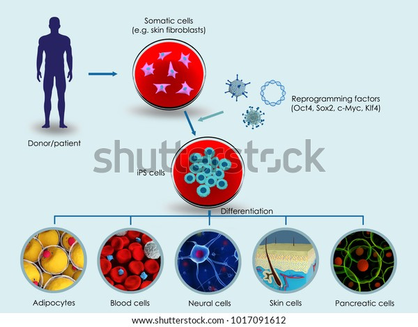 3d illustration of the making of induced pluripotent stem cells (iPSCs)