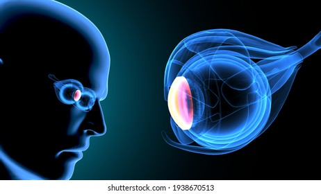 3d illustration of male human eye ball intersection anatomy system