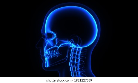 3d Illustration of a male human head and skull in X-ray
