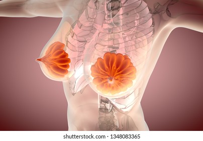 3D illustration of mammary gland, female breast anatomy