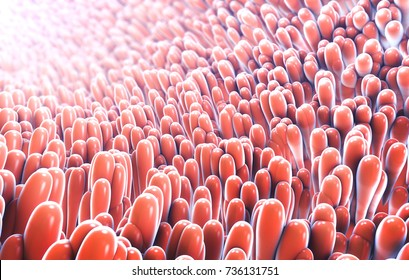 3d illustration of microscopic closeup of intestine villus