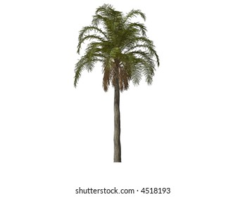 3D illustration of a palm tree
