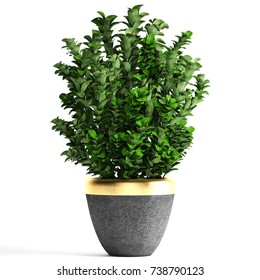 3D illustration plant berberis