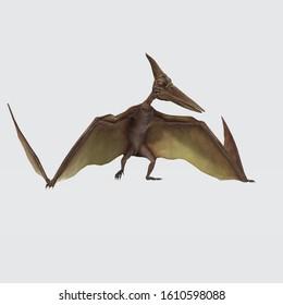 3D Illustration of pterodactyl. flying pterodactyl prehistoric dangerous creature of Jurassic period. Pteranodon (Pterodactyl) Dinosaur on white background .