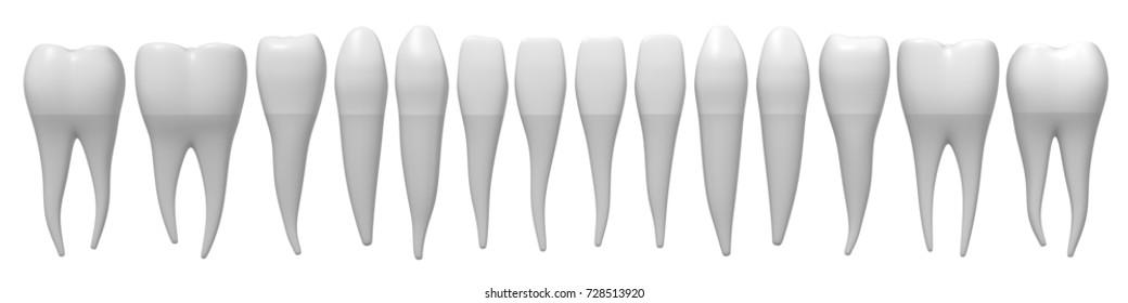 3D illustration/ 3D rendering - healthy human teeth.