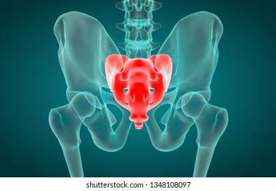 3D illustration of Sacrum, medical concept, x-ray
