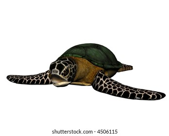 3D Illustration of a sea turtle