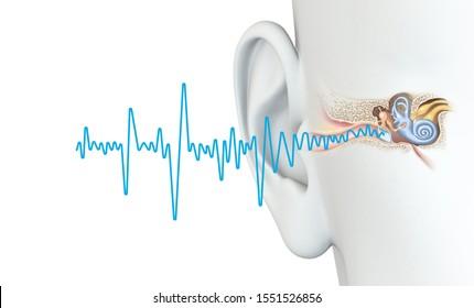 3D illustration showing blue soundwave and anatomical ear illustration