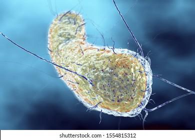 3D Illustration showing a single escherichia coli bacterium