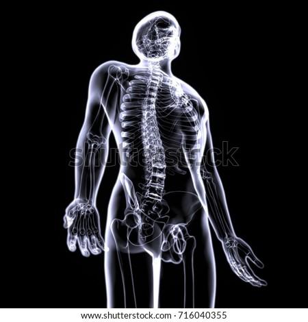 3 D Illustration Skeleton Anatomy Stock Illustration 716040355 ...