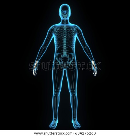 3 D Illustration Skeleton Bones Anatomy Parts Stock Illustration