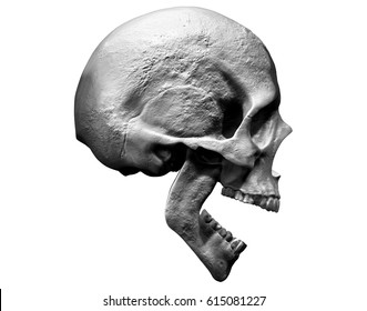 3D  illustration of a skull screaming isolated in white k  background side view