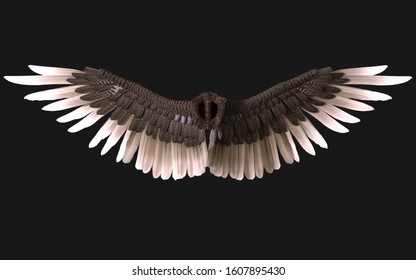 3d Illustration Sphinx Wings, Black Wing Plumage Isolated on Dark Background