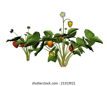 3D Illustration of a strawberry plant