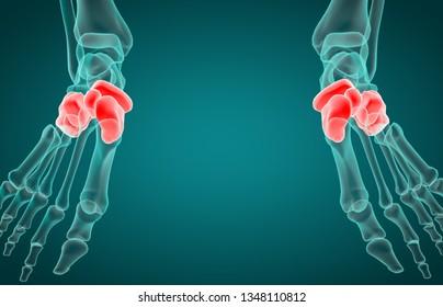 3D illustration of tarsal bone, x-ray