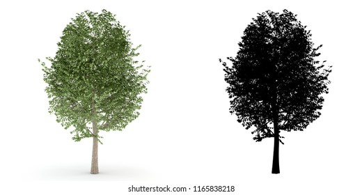 A 3D illustration tree with alpha mask isolated on white background.