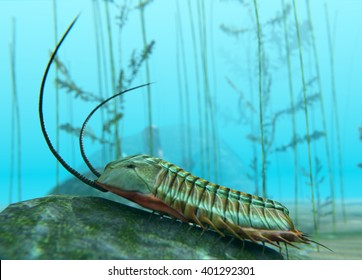 A 3D illustration of a Trilobite moving about on a Cambrian Period (400 million years ago) sea bottom. Trilobites are a well-known fossil group of extinct marine arthropods
