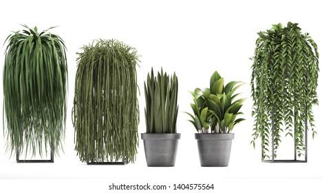 3d illustration of tropical plants