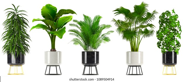 3d illustration of tropical plants in pots